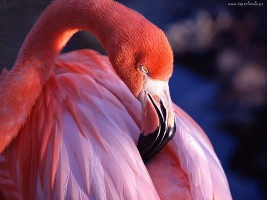 Piękno ptaków