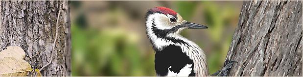 Ptasizm