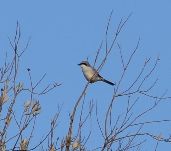 Pośród ptaków