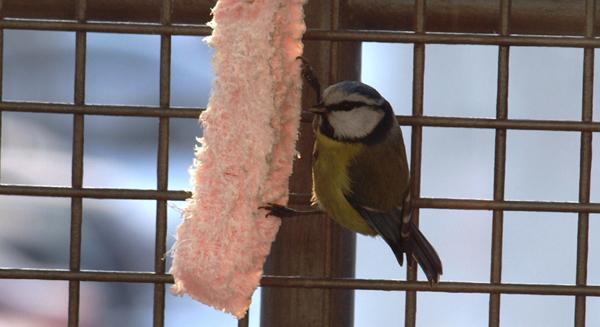 Ptaki na codzień