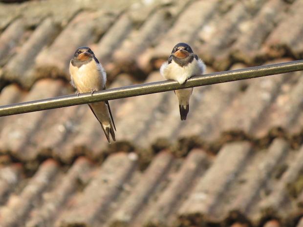Moje ptakowanie