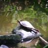 Żółwik :)
