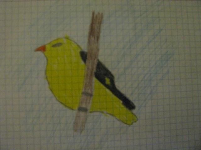 Co to za ptak..? :)