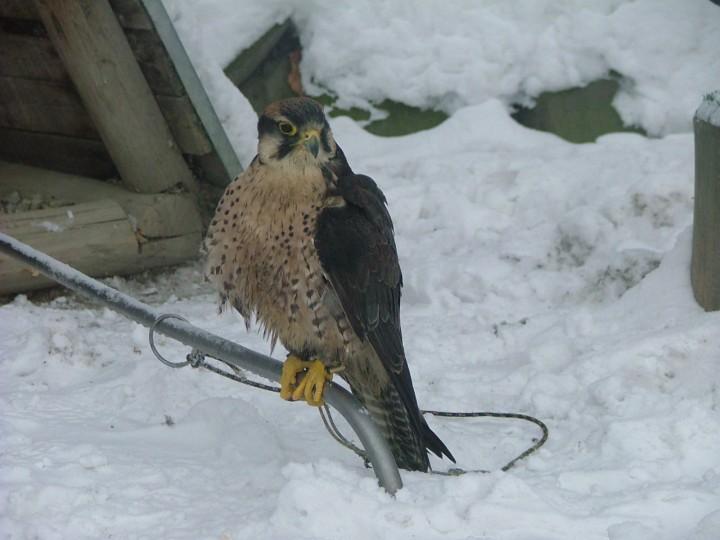 Co to za ptak? Odpowiedź ...