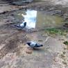gołębie ...