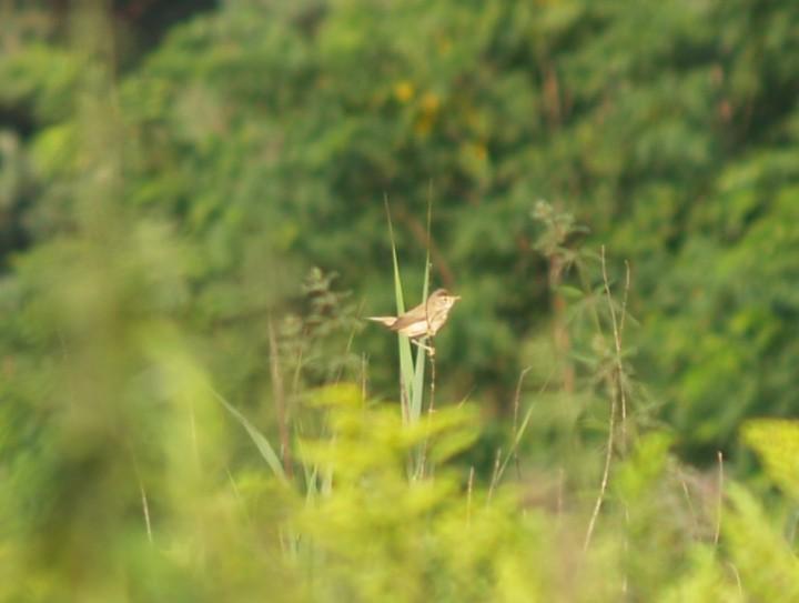 Kto wie cóż to za ptak?