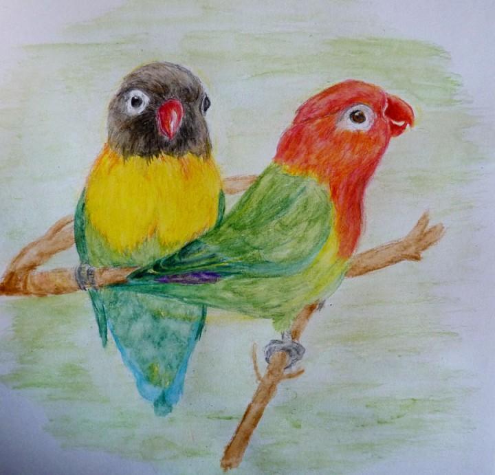 Dwie papużki - nierozłączki