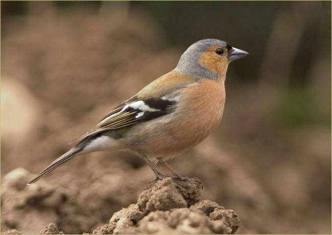 Cztery Pory Roku Z Ptakami Otop Junior