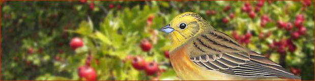 Blog ptaków